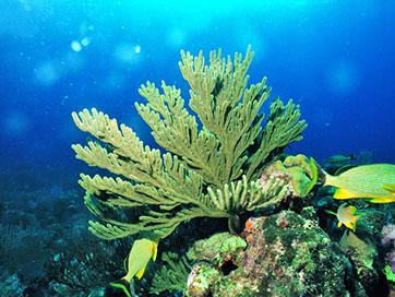 Tours in Cuba - Ocean Paradise NEW!