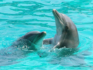 Tours in Cuba - Visiting the Dolphinarium NEW!